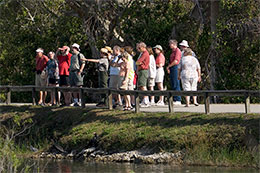 Ranger-guided walk on the Anhinga Trail