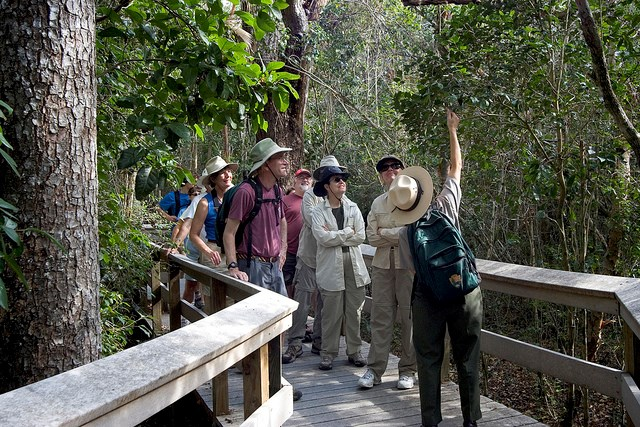 A park ranger leading a tour on a boardwalk, pointing at a tree
