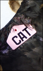 Pink Vulture Wing Tag