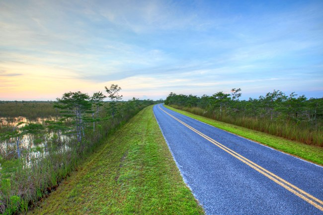 Road in the Everglades