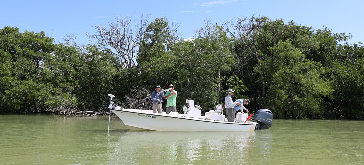 A group of anglers fish from a white boat on murky green water with a mangrove tree-lined shore behind them.