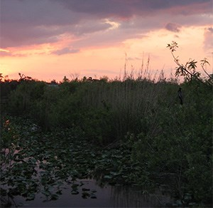 View of the Anhinga Trail at dusk