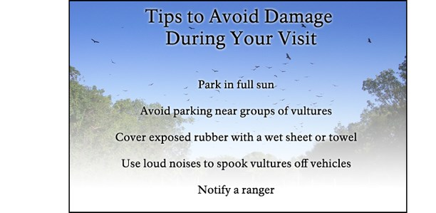 Tips to Prevent Damage