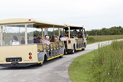tram at shark valley