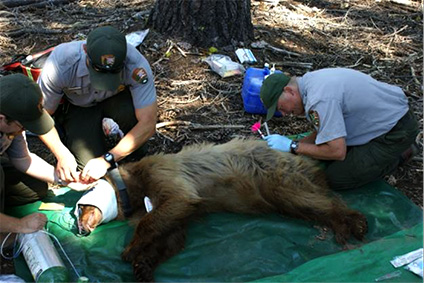 Animal Biologist Job Pictures to Pin on Pinterest - PinsDaddy