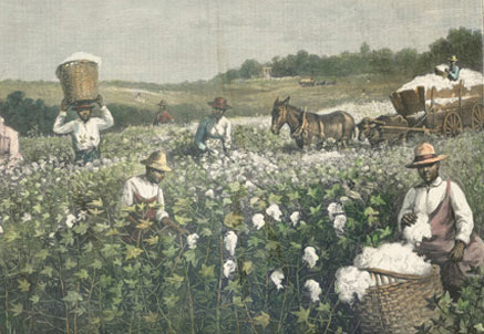 Image result for us civil war cotton