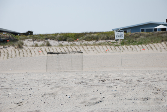 Plover exclosure and fencing in front of a Fire Island community.