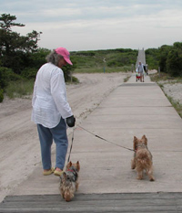Woman walks down boardwalk with  two small dogs on short leashes.