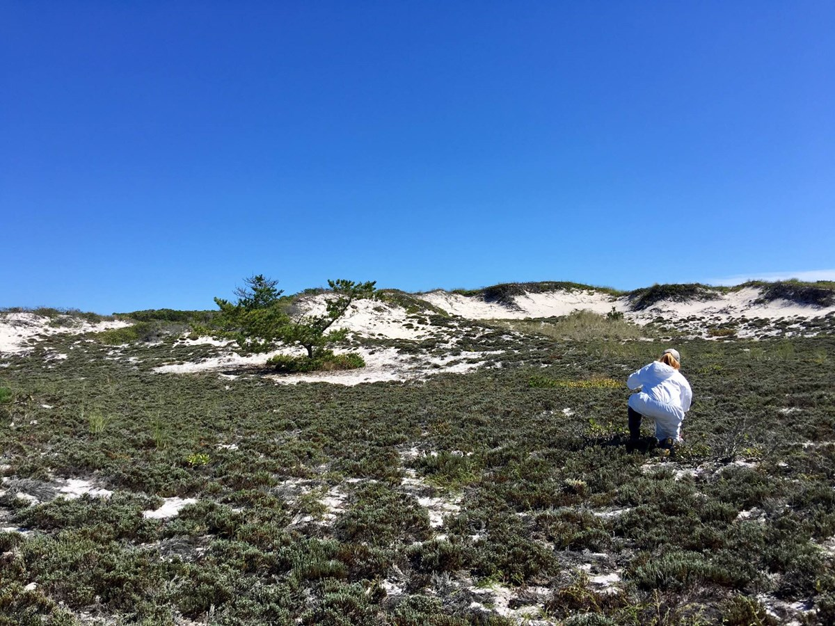A woman kneels in the dune to measure vegetation.