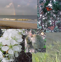 Collage of rainbow over water, butterflies, flowers, marsh grasses and rabbit.