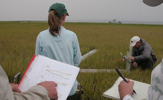 Scientists gathering data in salt marsh.