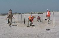 Volunteers construct wire cage or exclosure on sandy beach.