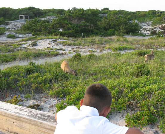 Boy watching deer at Sailors Haven.