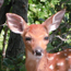 White-tailed Deer & Vegetation Management Plan