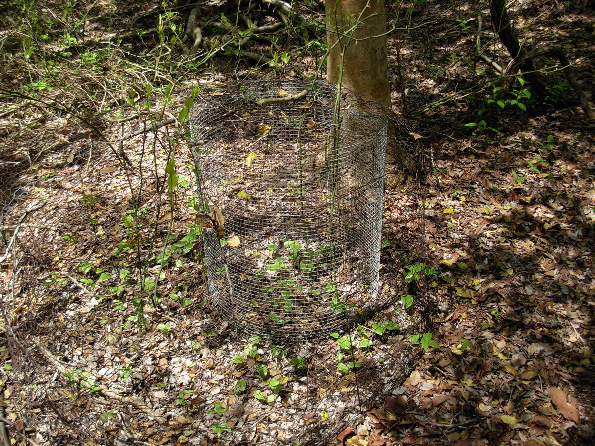Deer exclosure in Sunken Forest.