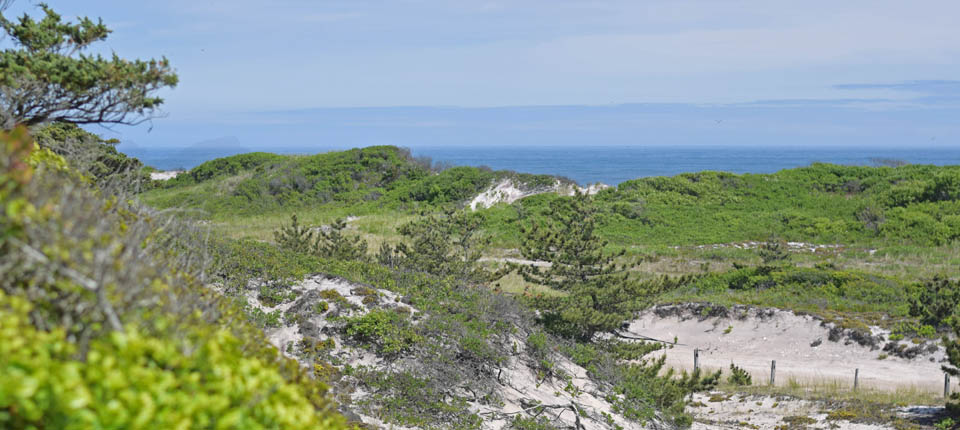 A view of the lush backdune habitat and ocean from the secondary dune.