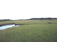 Small tidal stream is bounded by bright green saltmarsh grasses.