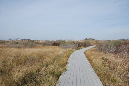 Ticks - Fire Island National Seashore (U.S. National Park Service)