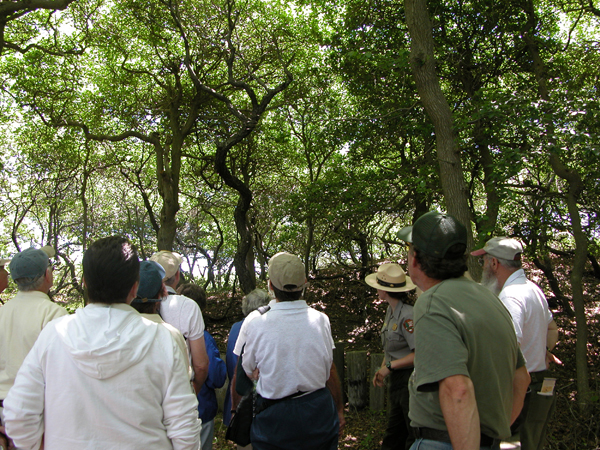 Ranger-guided tour in Fire Island's Sunken Forest.