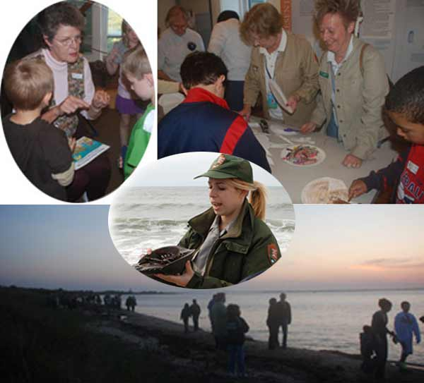 Collage of activities during horseshoe crab programs.