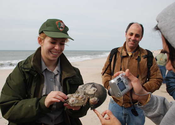Park ranger holds horseshoe crab shell, photographed by beach walk participant.