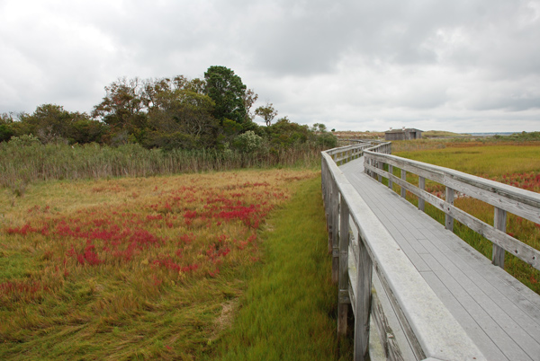 Salt marsh with colorful red patches of glasswort plants interspersed among green Spartina plants.
