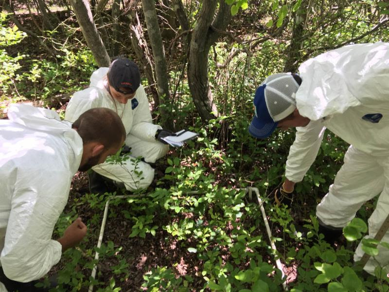 Three staff members in protective gear lean over a survey plot on the forest floor.