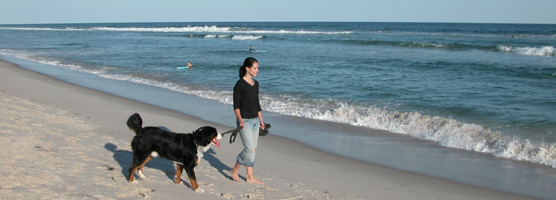Woman with large dog strolling on beach during the early fall.