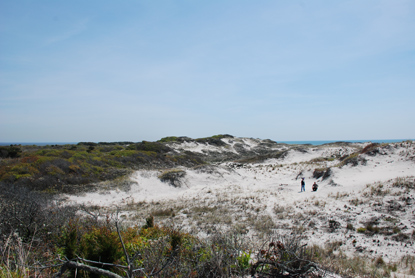 Fire Island Wilderness hike