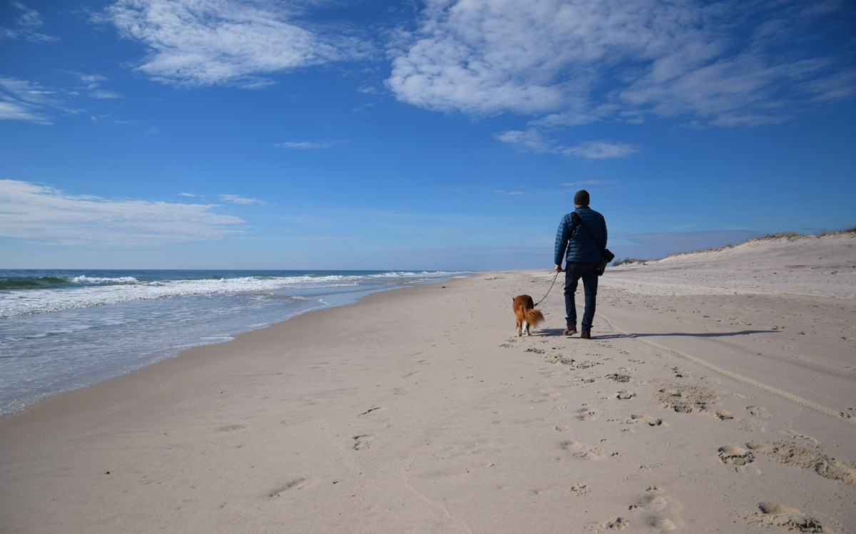 A man walks his leashed dog on a sandy beach under sunny skies.