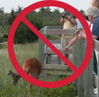 People reach over a rail to feed deer.