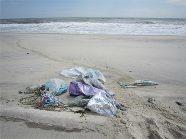 Marine debris can be a danger to wildlife. Learn more during an early Earth Day activity at Wilderness Visitor Center.