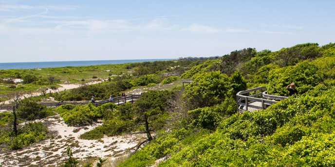 A view of the barrier beach from atop the secondary dune in the Sunken Forest at Sailors Haven.