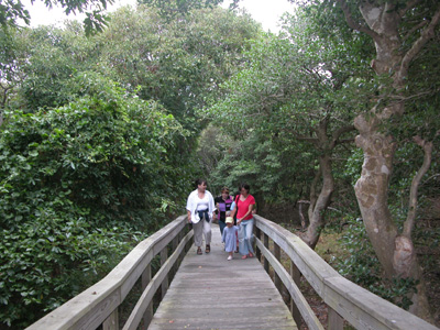 Group on boardwalk emerges from canopy of thick trees.