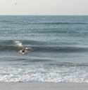 Swimmer in small wave.