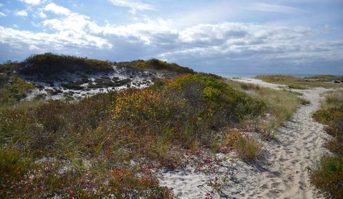 View of sand trail and dune vegetation on Fire Island.