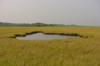 Small pond is located in the middle of a light green salt marsh.