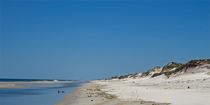 The high dunes of the Otis Pike Fire Island High Dune Wilderness stretch along Fire Island's ocean shoreline.