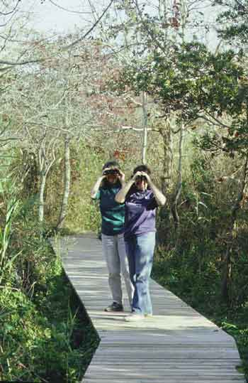 Two bird-watchers looking through binoculars.