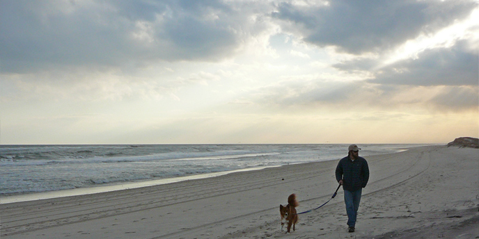 Leashed pets are restricted on ocean beaches from March 15 through Labor Day