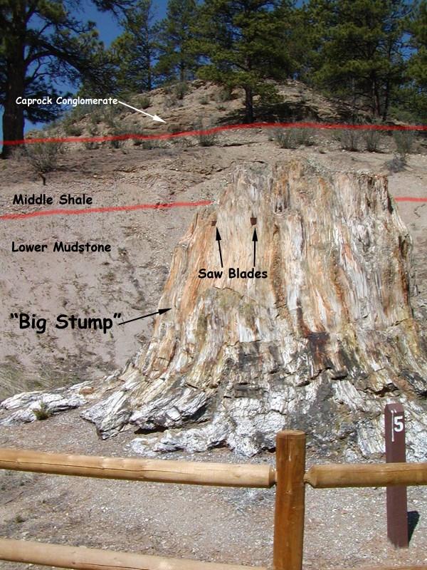 Even Walt Disney Visited Florissant Fossil Beds National