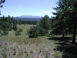View of Pikes Peak from Sawmill Trail