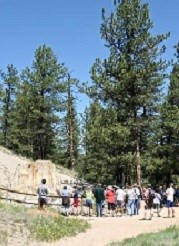 Visitors viewing the Big Stump