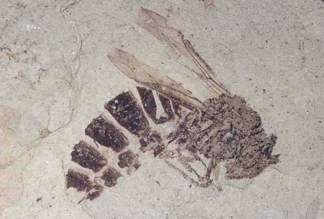 cb99c29acf99 Basic Information - Florissant Fossil Beds National Monument (U.S. ...