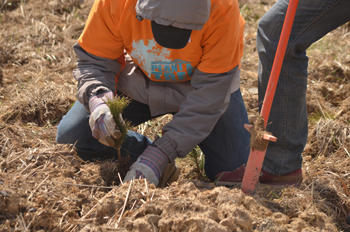 Volunteers planting a tree for Plant-a-Tree 2014
