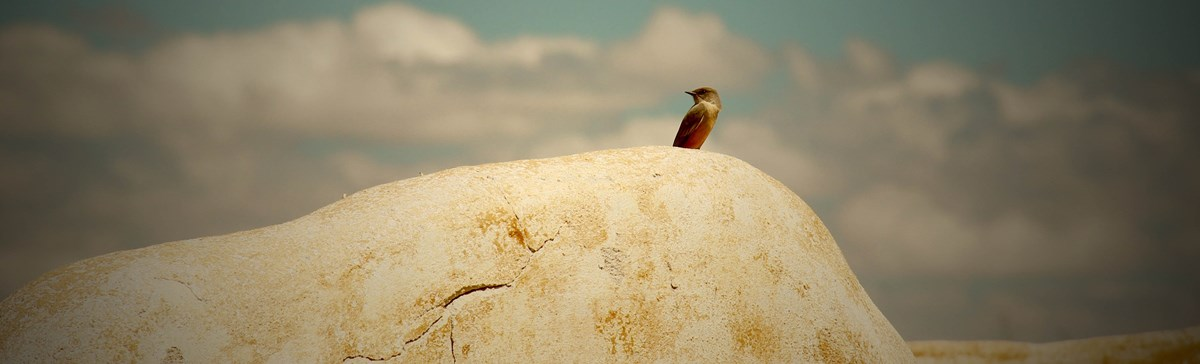 A solitary bird perches on an adobe wall