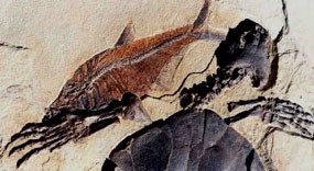 Fossils like this turtle and fish provide information about past environments.