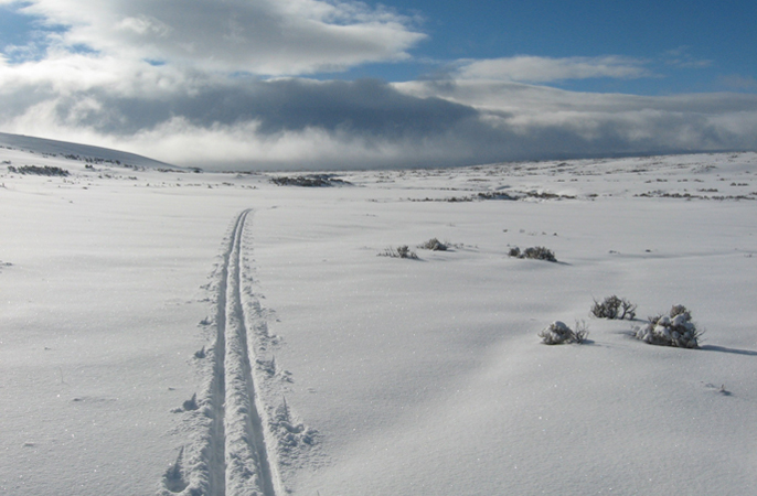 cross-country ski tracks in snow
