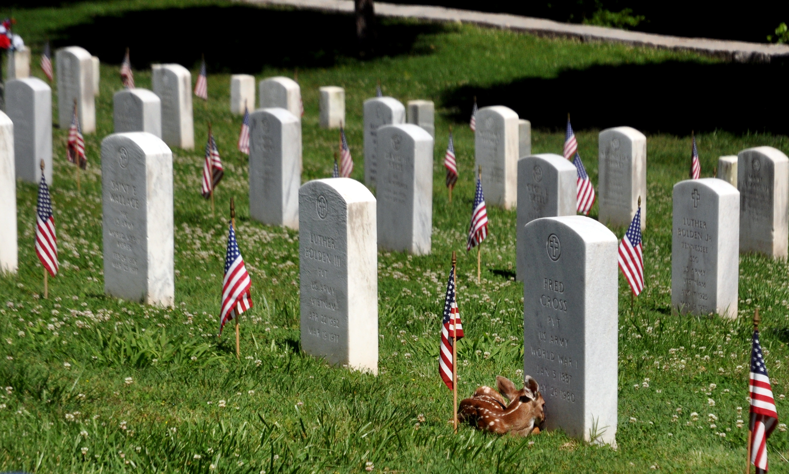 American flags placed on the graves of every veteran buried at the National Cemetery at Fort Donelson