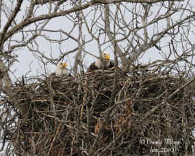 Work on nest